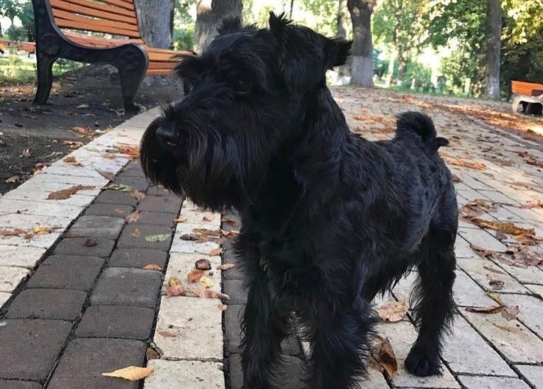 Петя, собака Зеленского