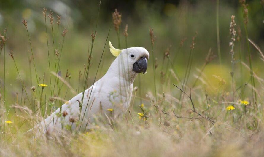 Попугай впервые увидел щенка и признался ему в любви