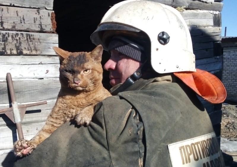Спасенный на пожаре рыжий кот
