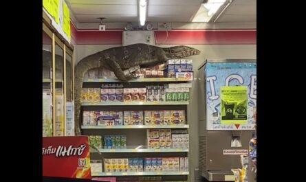 Варан в магазине Таиланда