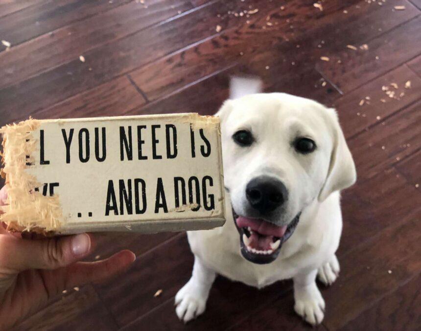 Собака по кличке Такер