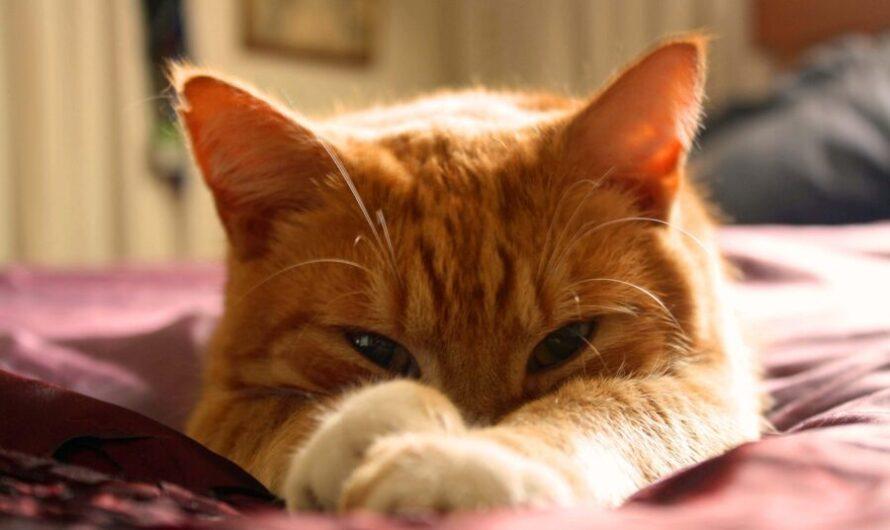 Спасенного из пожара рыжего кота сочли «бандитом»