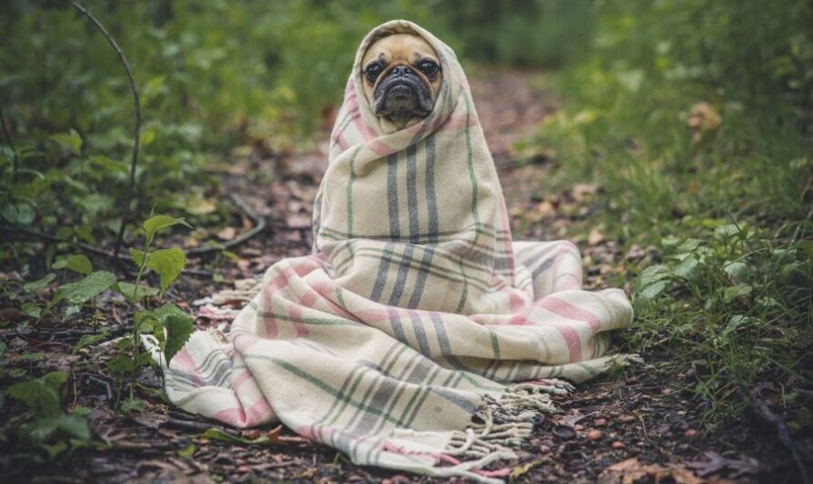 Внезапно выбежавшая к бегунам на соревнование собака заняла первое место