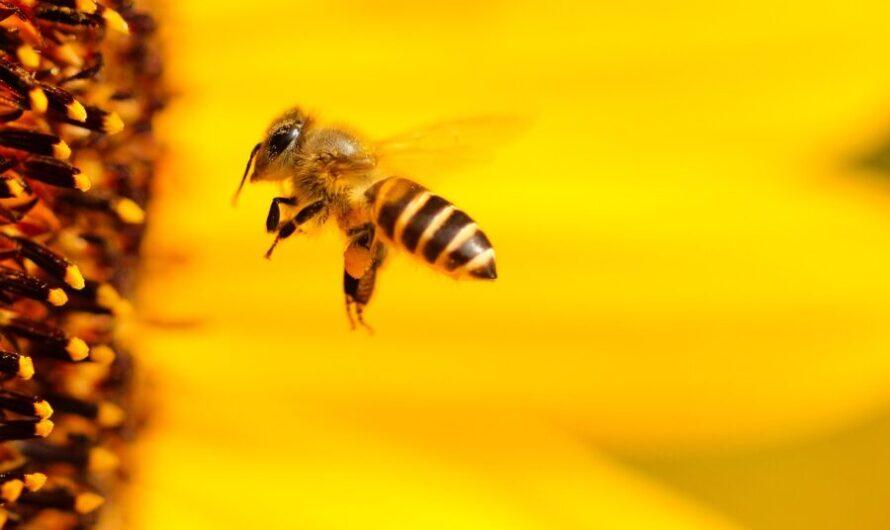 Пчелы открутили крышку с «Фанты» — показали командную работу!