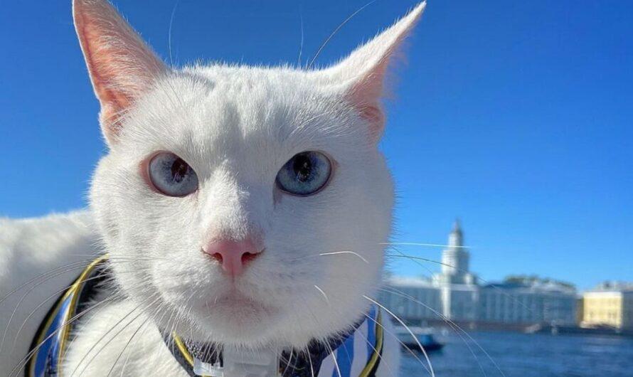 Кто кот Ахилл и где смотреть его прогнозы на ЧЕ 2020