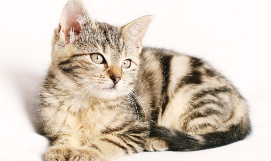 Павел Прилучный спас котенка