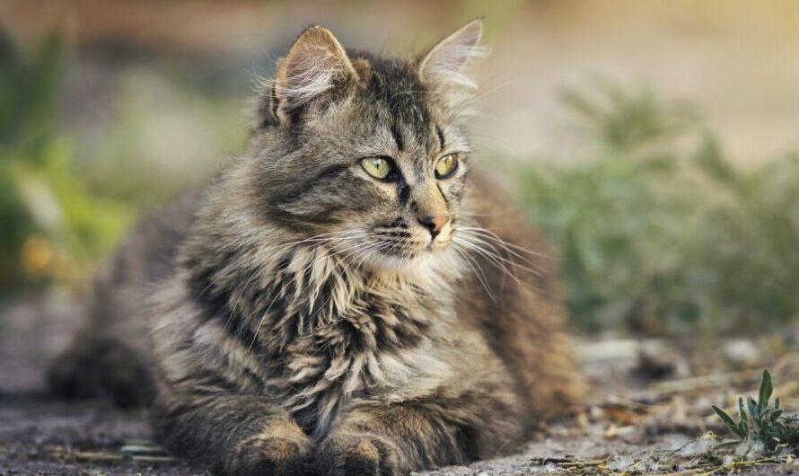 Кошка Агаты Муцениеце набедокурила